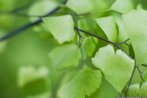 green-leaves-wallpaper